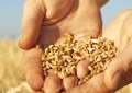 TÜGİS bu yıl da Dünya Gıda Günü'nü organize ediyor