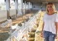 Baltalı Gıda'ya gıda güvenliği konusunda tam not