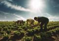 Şekerbank, 'Aile Çiftçiliği Bankacılığı'nı başlatıyor