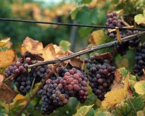 Kış aylarında kırmızı meyvelerin suyunun tüketilmesi öneriliyor