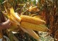 """""""İyi tarım""""a katkıda bulunmanın yolları"""