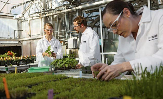 BASF'nin tarımda 2025 planları hazır