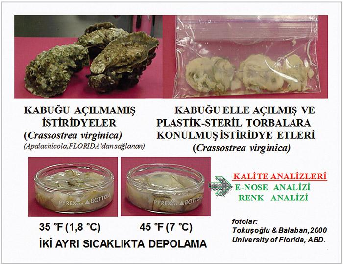Gövde üzerinde kabuklu deniz ürünleri