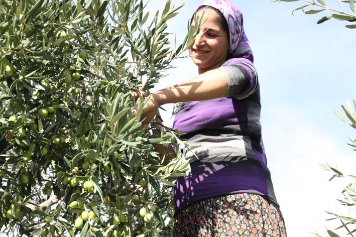 """""""Hükümetten kendi eliyle diktiği zeytin ağaçlarını korumasını bekliyoruz"""""""