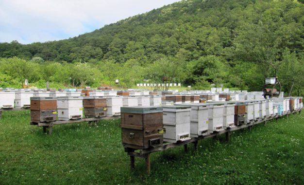 """İklim ve çevresel kirlilik """"arıları"""" da vurdu"""