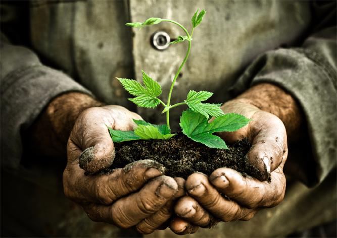 Ebru Şef yerel tohum bankası kuracak