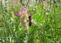 Sağlıklı Beslenme ve Apiterapi İçin Değerli Bir  Arı Ürünü: Perga (Bee Bread)
