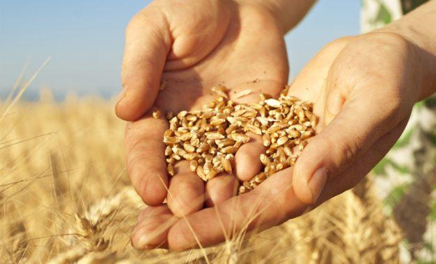 """Duru Bulgur Yönetim Kurulu Başkanı İhsan Duru: """"Tarım Havza Modeli"""" doğru uygulandığında buğday ekimindeki düşüş önlenebilir"""