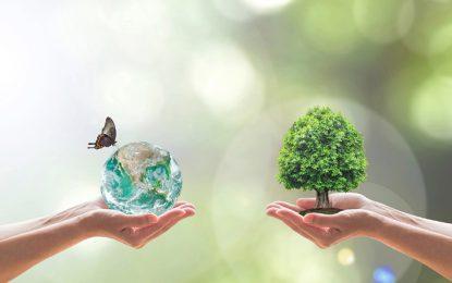 CHEP iş modeliyle doğal kaynak tüketimini azaltıyor