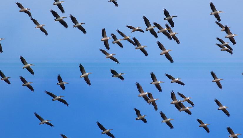Kuş Gözlem Günü'nde kuş gözlemcileri buluştu