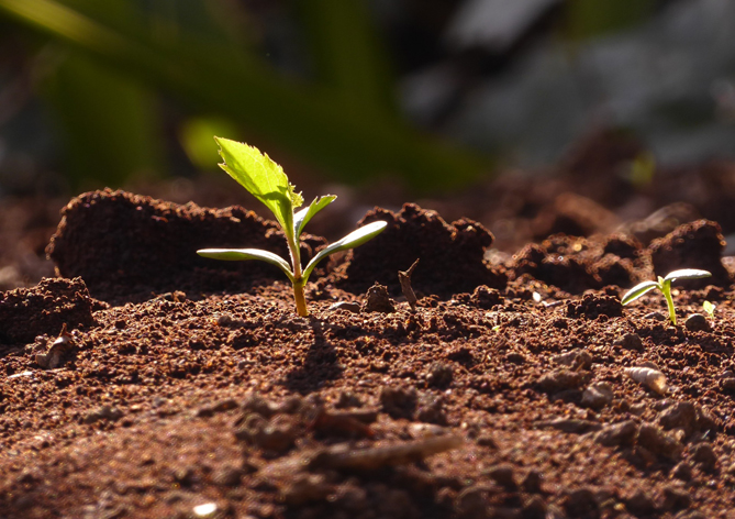 """TEMA Vakfı """"Toprağı koru, iklimi koru"""" diyor"""