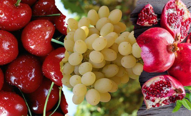 Kiraz, üzüm ve nar ihracatını ikiye katlayacak
