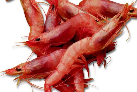 Kocaman Balıkçılık'tan İspanya'ya karides ihracatı