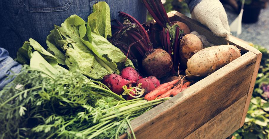 Organik beslenme popüler bir diyet yaklaşımı mı sağlık için gereklilik mi?