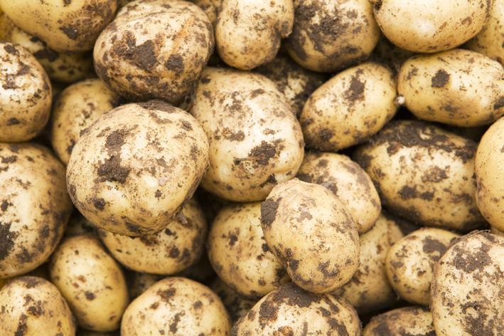 Tomra Food, yeni ayıklama makinesi ile patates üretimine değer katıyor
