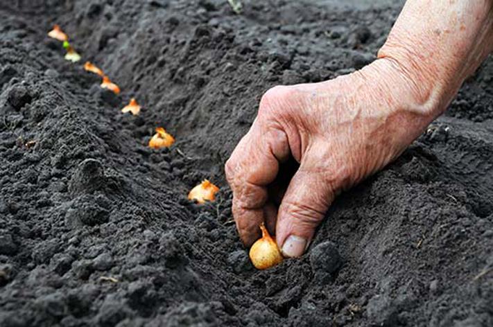 """""""Hedefimiz dünya tohum sektöründe ilk 5'te yer almak"""""""