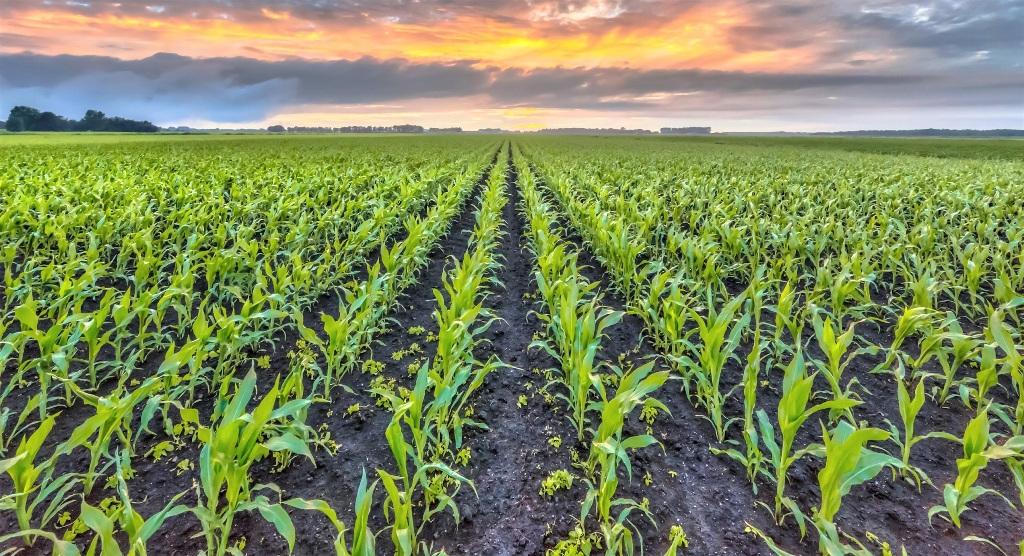 Cargill salgın döneminde çiftçilere destek verdi