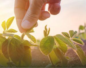 Koronavirüsün tarım ve gıda sektörüne etkisi