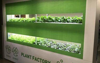 MSA ve Plant Factory dikey tarımda bir ilke imza atıyor