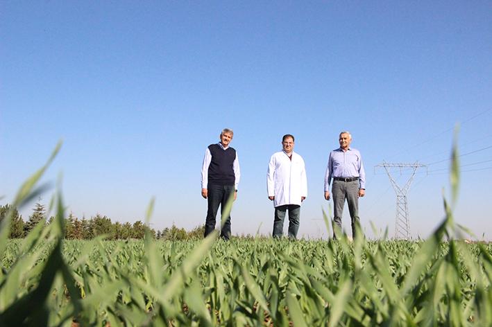 Küresel tahıl ve bakliyat pazarında Türkiye'yi büyük fırsatlar bekliyor