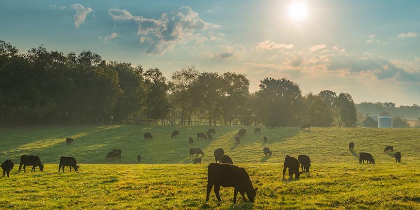 Ruminant hayvanlarda vitamin ve mineral desteği süt verimliliğini artırıyor